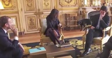 Ο σκύλος του Mακρόν... ούρησε on camera μέσα στο Μέγαρο των Ηλυσίων (Video) - Κεντρική Εικόνα