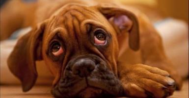 Το άγχος των αφεντικών αντανακλάται στα σκυλιά τους - Κεντρική Εικόνα
