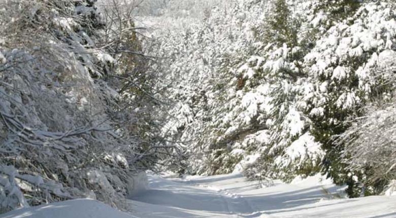 Χιόνια και στην Αττική: Μέχρι ποιο υψόμετρο θα χιονίσει την Τετάρτη (photos) - Κεντρική Εικόνα