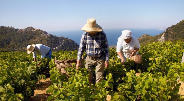 Οινοπαραγωγοί Σάμου και «κρασί που μυρίζει Ελλάδα» - Κεντρική Εικόνα