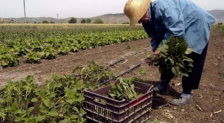 Έρχεται «τσεκούρι» σε όσους έχουν αγροτικό εισόδημα - Κεντρική Εικόνα