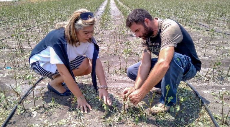 Aγρότες: Τρεις νέες φορολογικές διευκολύνσεις για αγροτικές ενισχύσεις και επιδοτήσεις - Κεντρική Εικόνα