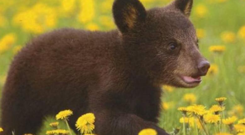 Ιωάννινα: Επιχείρηση διάσωσης για παγιδευμένο αρκουδάκι - Κεντρική Εικόνα