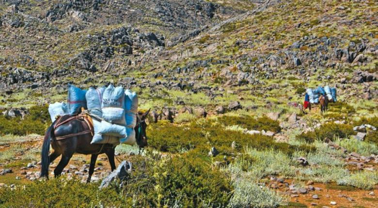 Οργανωμένες επιδρομές Αλβανών στα ελληνικά βουνά - Κεντρική Εικόνα