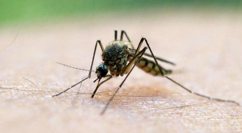 Μέτρα προφύλαξης λόγω ιού του Δυτικού Νείλου συνιστά ο ΙΣΑ - Κεντρική Εικόνα