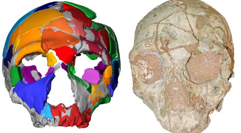 Ένα κρανίο 210.000 ετών από την Ελλάδα αποτελεί το αρχαιότερο δείγμα Homo sapiens σε όλη την Ευρασία - Κεντρική Εικόνα