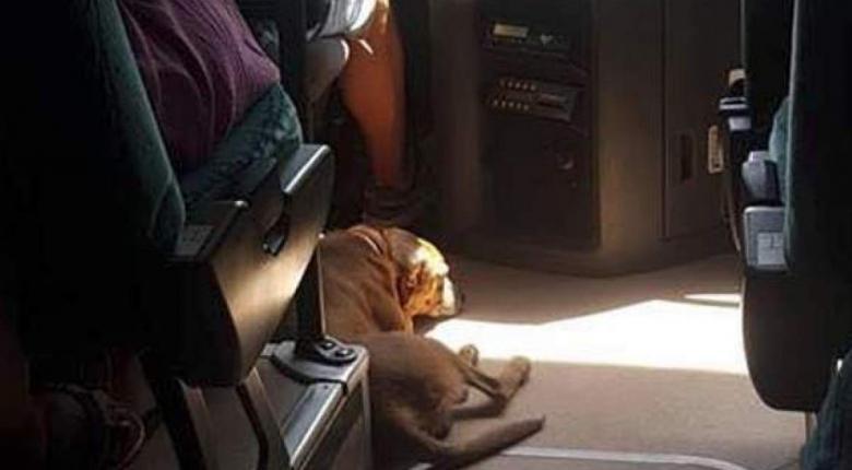 Οδηγός ΚΤΕΛ αφήνει αδέσποτο σκύλο να μπει μέσα για να προστατευτεί από τον καύσωνα - Κεντρική Εικόνα