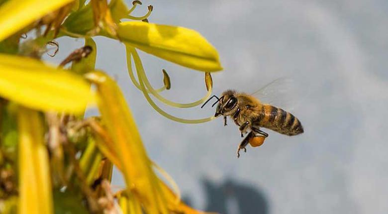 Άτυχος 32χρονος έχασε τη ζωή του από τσίμπημα μέλισσας - Κεντρική Εικόνα
