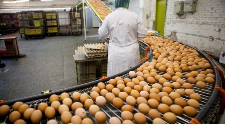 Μεγάλη εταιρεία παραγωγής αυγών «καψονάρει» εργάτες βάζοντάς τους σε... τσίγκινα κουτιά!  - Κεντρική Εικόνα