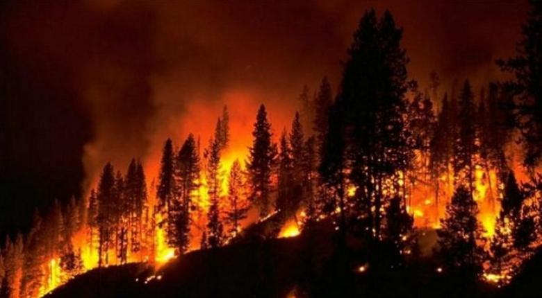 Υπό έλεγχο έχουν τεθεί οι δύο μεγάλες πυρκαγιές που μαίνονταν στην κεντρική Πορτογαλία - Κεντρική Εικόνα