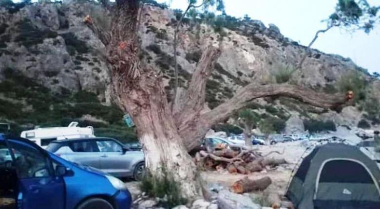 Σούγια: Κάτοικοι έκοψαν τα δέντρα για να διώξουν τους κατασκηνωτές (Photos) - Κεντρική Εικόνα