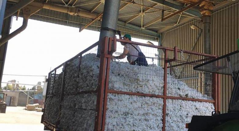 Αραχωβίτης: Συνεργασία ΟΠΕΚΕΠΕ-ΕΛΓΑ για τους βαμβακοπαραγωγούς που δεν έλαβαν την ειδική ενίσχυση - Κεντρική Εικόνα