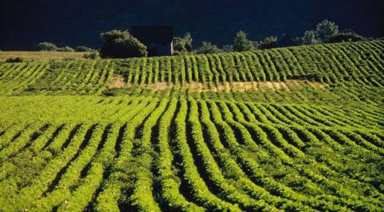 Επιχειρηματίας δεν μπορεί να πουλήσει γη επειδή χρωστά ΕΝΦΙΑ 0,03 ευρώ (pic) - Κεντρική Εικόνα