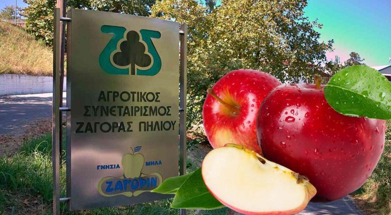 Τα μήλα Ζagorinέγιναν 100 ετών και μπαίνουν σε νέες κατηγορίες - Κεντρική Εικόνα